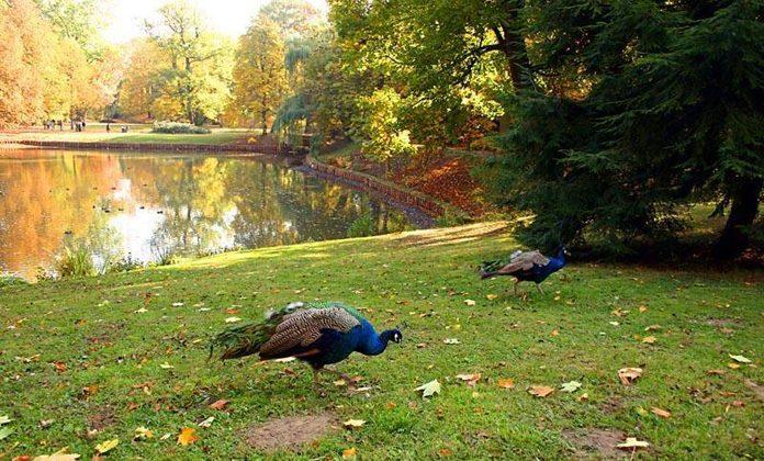 Varsavia Parco Lazienki