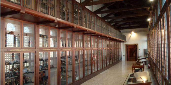 Venezia Museo Storia Naturale