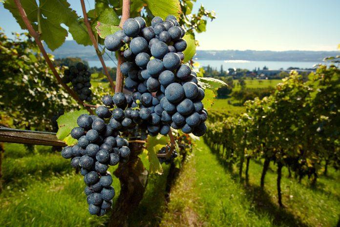 Umbria Vini