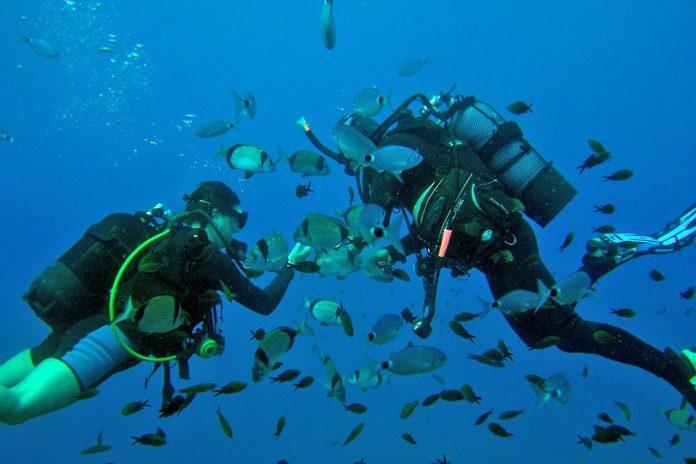 Cipro Immersioni Sub