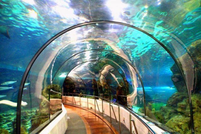 Barcellona L'Aquàrium