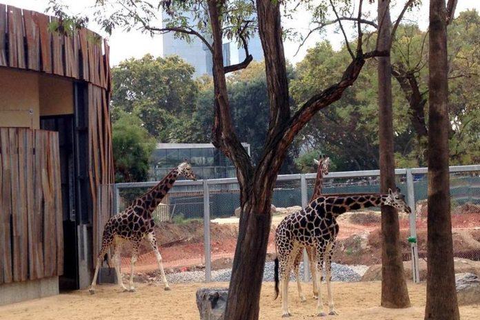 Barcellona Parco Zoologico