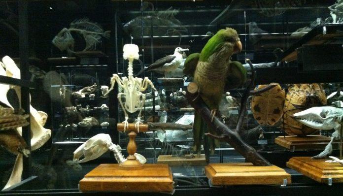 Barcellona Museo Scienze Naturali
