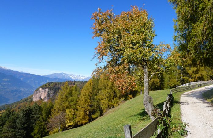 Bolzano Boschi del Salto