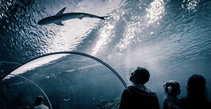 visitare acquario di copenaghen