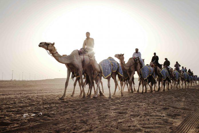 Dubai Camels Safari Deserto