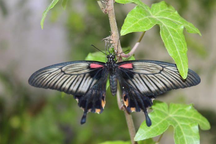 Dubai Miracle Garden - Butterfly Garden