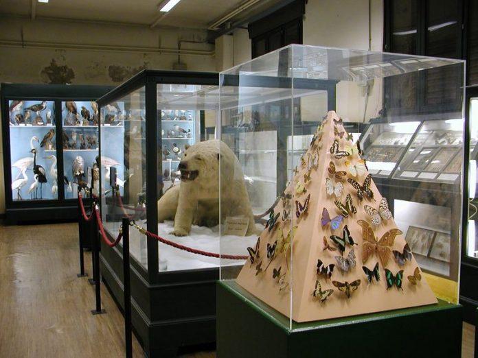 Ferrara Museo Storia Naturale