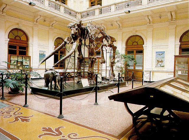 Genova Museo Storia Naturale