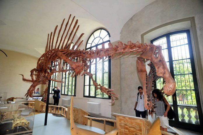 Milano Museo di Storia Naturale