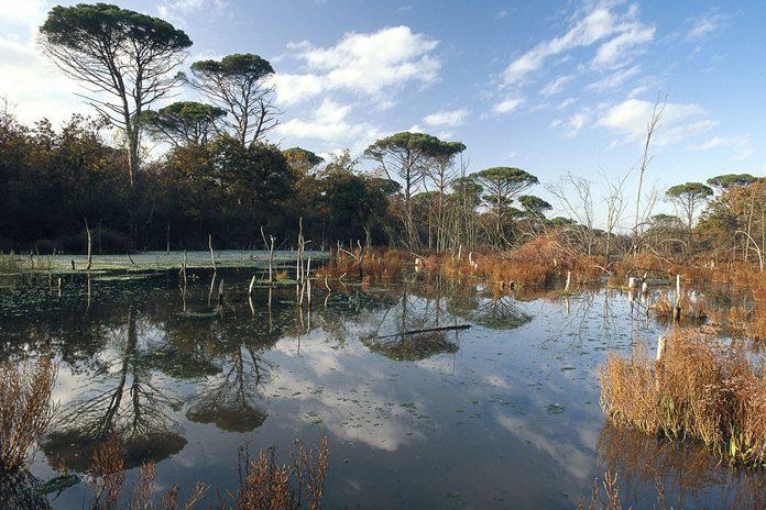 Parco delta del Po