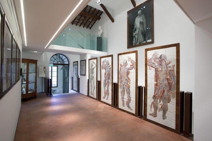 Siena Museo dei Fisiocritici