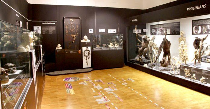 Trieste Museo Storia Naturale